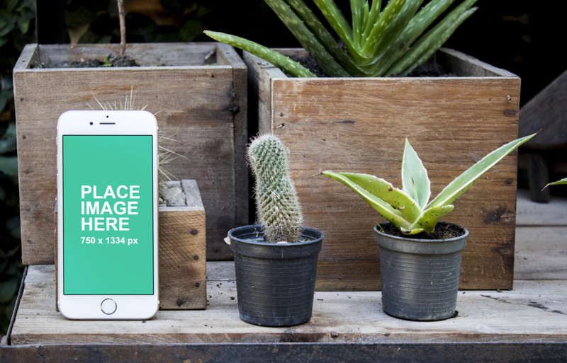 iPhone 6 with plants